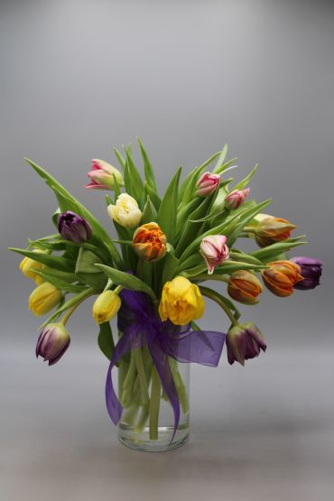 Tulips Spring (Assorted Color)