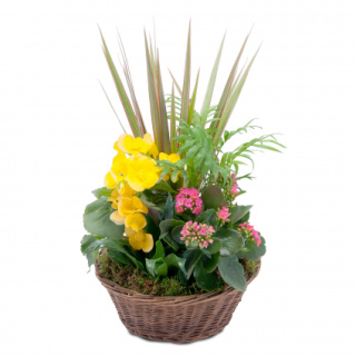 Blooming Sunshine Basket